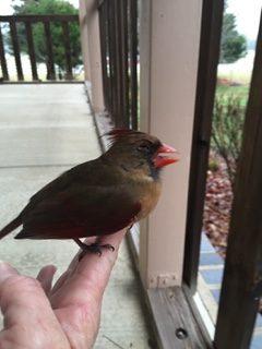 bird on finger