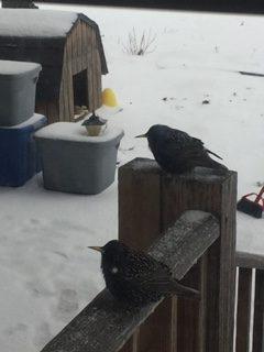 birds on rail