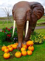elephant in flowers