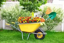 wheel barrow with flowers